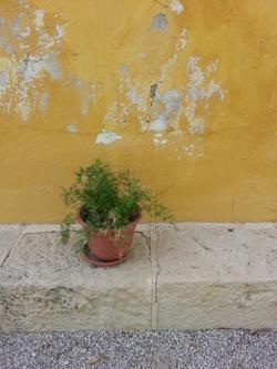 FINCA-PROTEGIDA-RAVEL_Inspeccion-tecnica_Grietas-desconchamientos-fachada